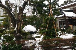 新潟の雪.jpg